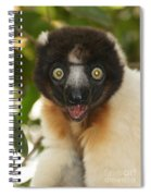 sifaka from Madagascar 8 Spiral Notebook
