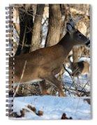 Silent Creeper Spiral Notebook