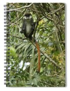Silly Red-tailed Monkey Spiral Notebook