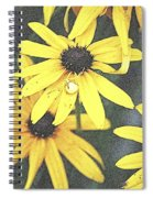 Silly Susans Spider Spiral Notebook
