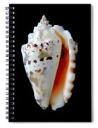Silver Conch Seashell Spiral Notebook