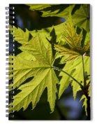 Silver Maple Spiral Notebook