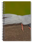 Silver Pheasant In Strutting Pose Spiral Notebook