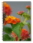 Silver-spotted Skipper Butterfly On Lantana Blossoms Spiral Notebook