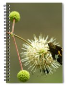 Silver-spotted Skipper On Buttonbush Flower Spiral Notebook