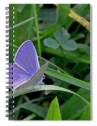 Silver Studded Blue Butterfly Spiral Notebook