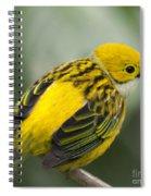 Silver-throated Tanager - Tangara Icterocephala Spiral Notebook