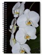 Silver Trio  Spiral Notebook