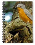 Silverbird Spiral Notebook