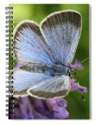 Silvery Blue Butterfly Spiral Notebook