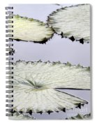 Silvery Sage Green Lily Pads Spiral Notebook