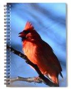Singing Cardinal Spiral Notebook