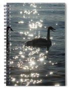 Singing Trumpeter Swans Duet  Spiral Notebook