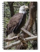 Single Bald Eagle Spiral Notebook