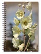 Single Buttercream Hollyhock Spiral Notebook