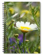Single Daisy In A Field Spiral Notebook