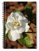 Single Gandenia Spiral Notebook