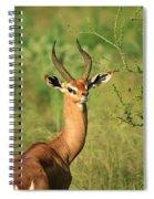 Single Grant's Gazelle Spiral Notebook
