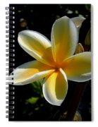 Single Plumeria Spiral Notebook