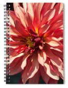 Single Red Bloom Spiral Notebook