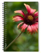 Single Red Spiral Notebook