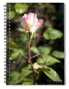Single Rose Spiral Notebook