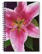 Single Stargazer Lily Spiral Notebook