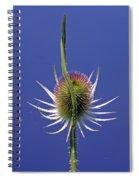 Single Teasel Spiral Notebook