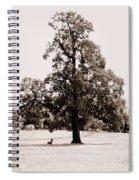Single Tree Journey Spiral Notebook