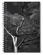 Single Tree With New Spring Leaves In Black And White Spiral Notebook
