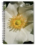 Single White Rose Db Spiral Notebook