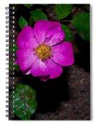 Single Wild Rose Spiral Notebook
