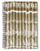 Singles In Gold Spiral Notebook