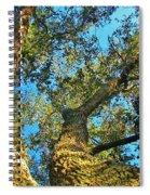 Sister Oaks Spiral Notebook