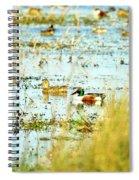 Sitting Ducks Spiral Notebook
