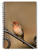 Sitting Pretty Red House Finch Spiral Notebook