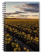 Skagit Daffodils Sunset Sunstar Spiral Notebook