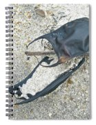 Skate Egg Cases On Sand Spiral Notebook