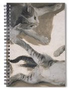 Sketches Of A Kitten Spiral Notebook