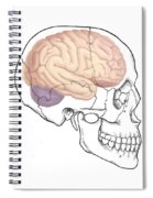 Skull And Brain Spiral Notebook