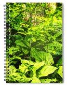 Skunk Cabbage Thicket Spiral Notebook