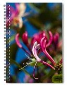 Sky Blue Pink Spiral Notebook
