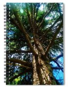 Skyward Spruce Spiral Notebook