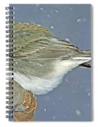 Slate Colored Junco Female Spiral Notebook