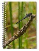 Slaty Skimmer Sunning Spiral Notebook