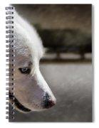 Sled Dog Spiral Notebook