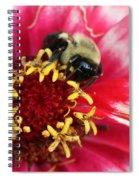 Sleeping Bumble Bee Spiral Notebook