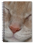 Sleeping Cat Face Closeup Spiral Notebook