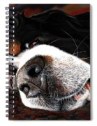 Sleeping Dogs Lie Spiral Notebook