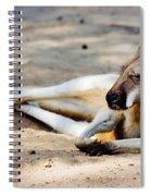 Sleeping Kangaroo Spiral Notebook